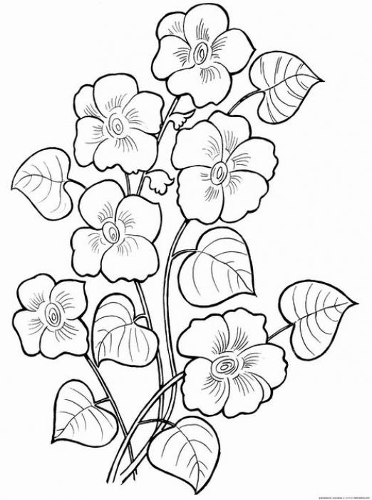 Цветы в раскрасках